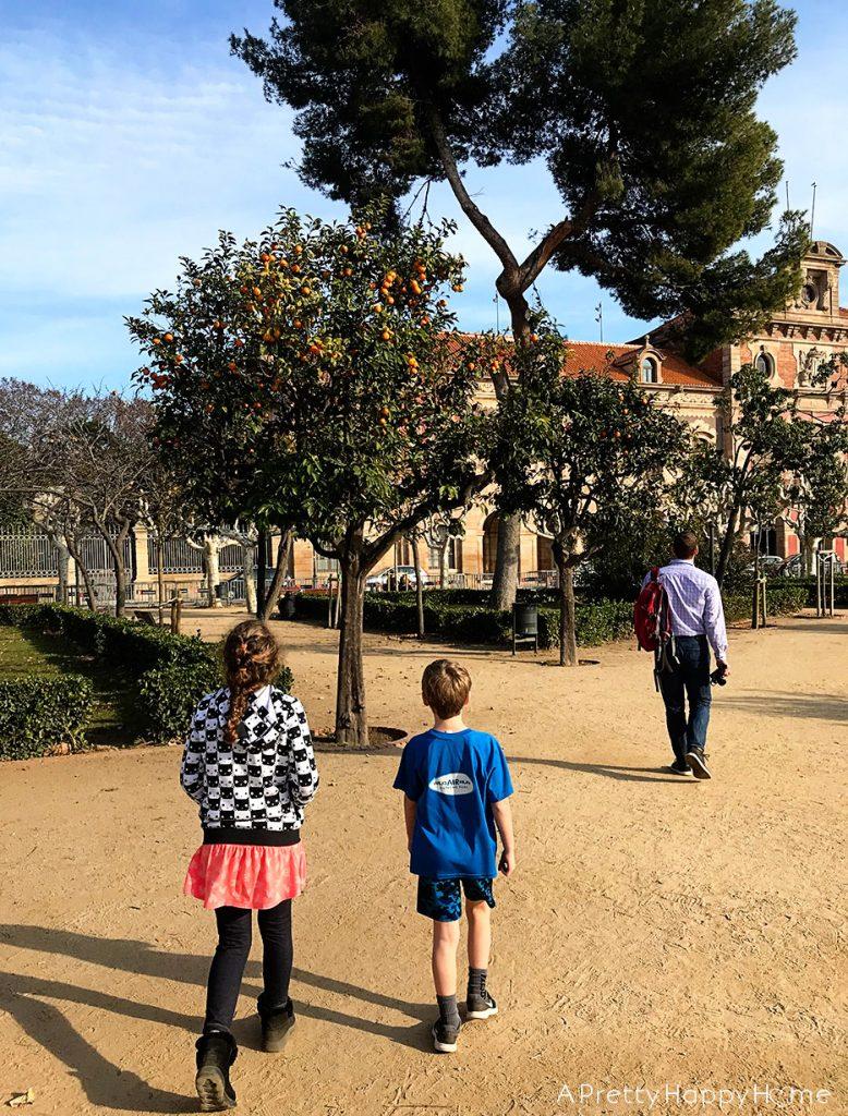 orange trees barcelona on the happy list