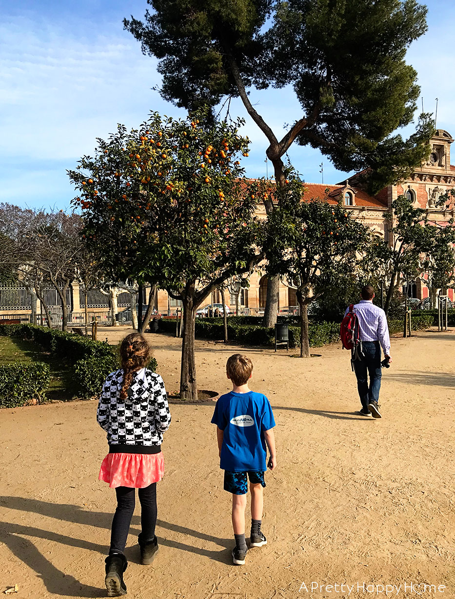 orange trees barcelona on the happy list