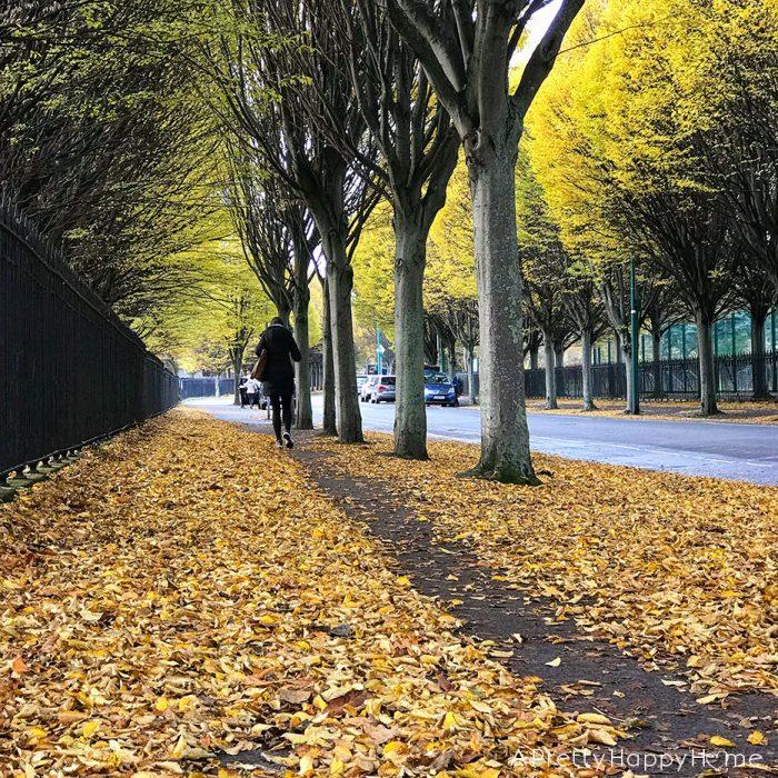 fall leaves in dublin