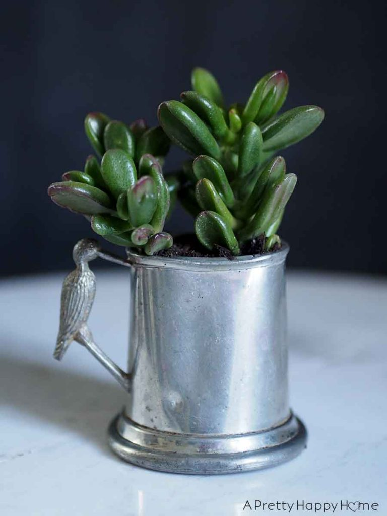 pewter baby cup Unexpected Succulent Planters