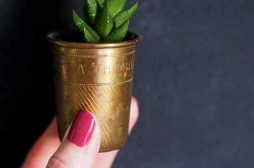 succulent in a shot glass