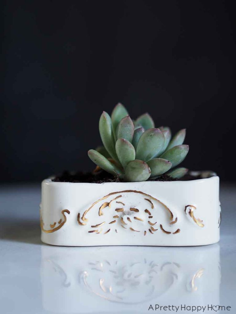 small dish Unexpected Succulent Planters