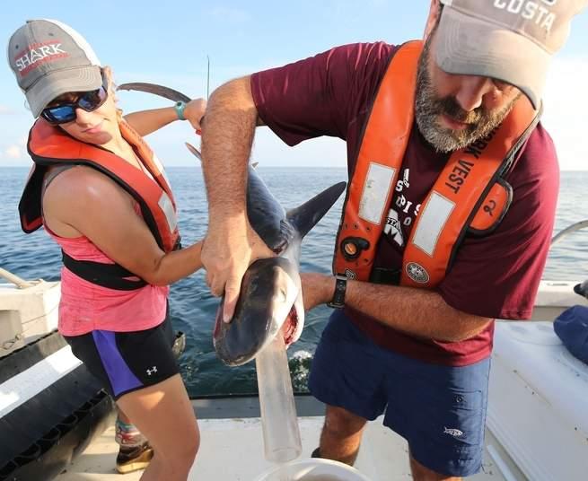 baby shark puke via popular science