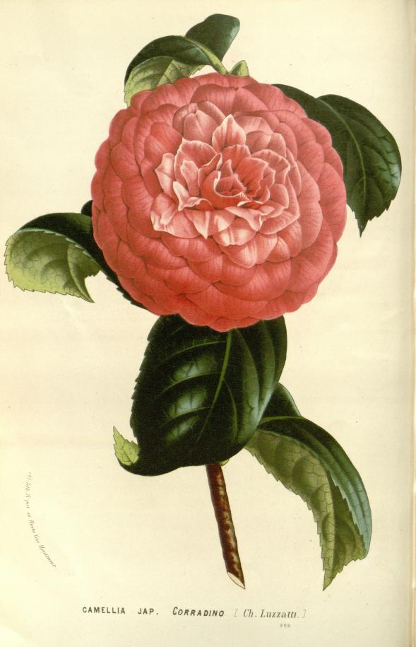 flower from biodiversity heritage library on the happy list
