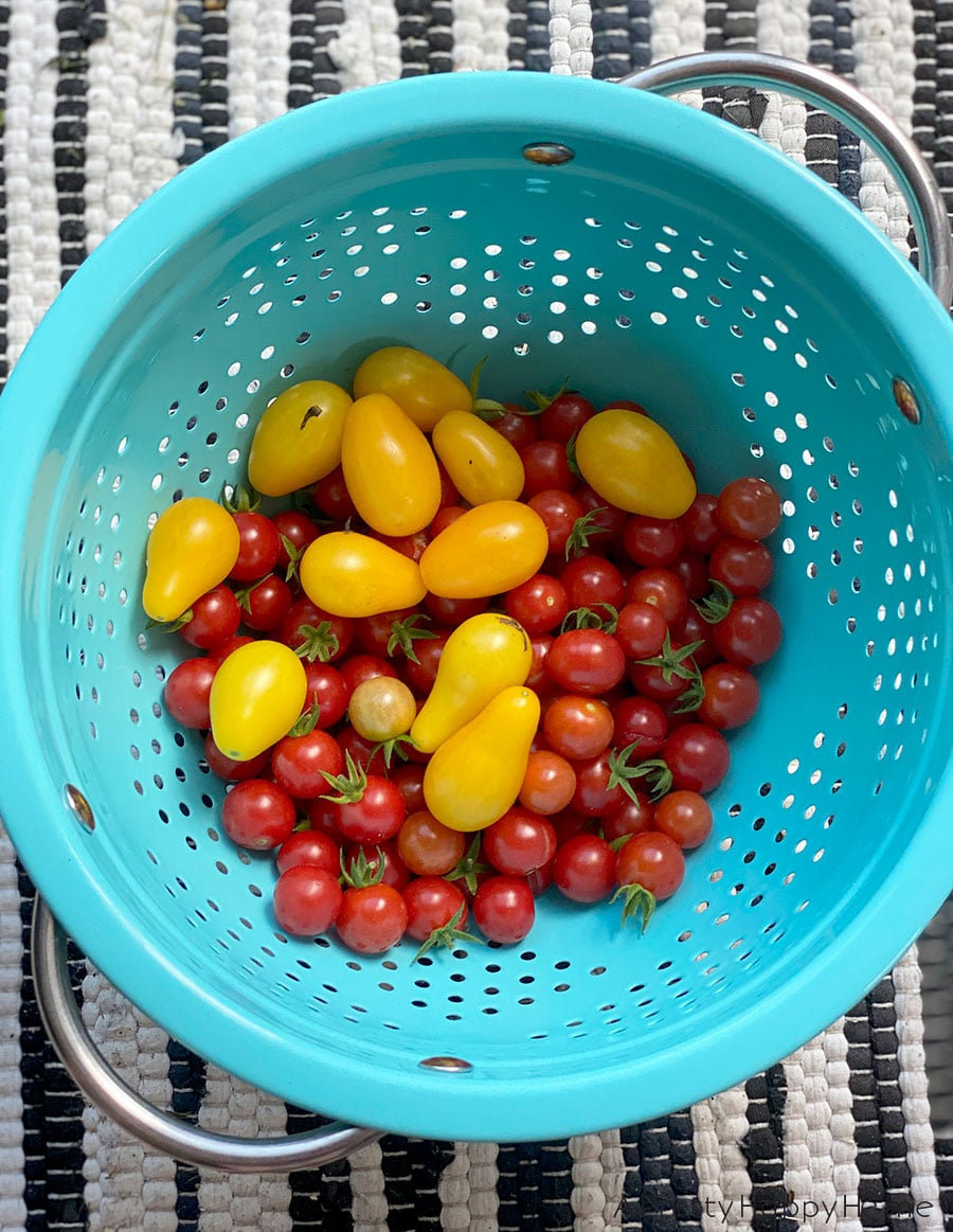 tomatoes in a colander on the happy list